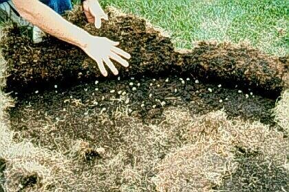 Summer lawn care how to kill grubs moles and ant control how summer lawn care how to kill grubs moles and ant control ccuart Choice Image