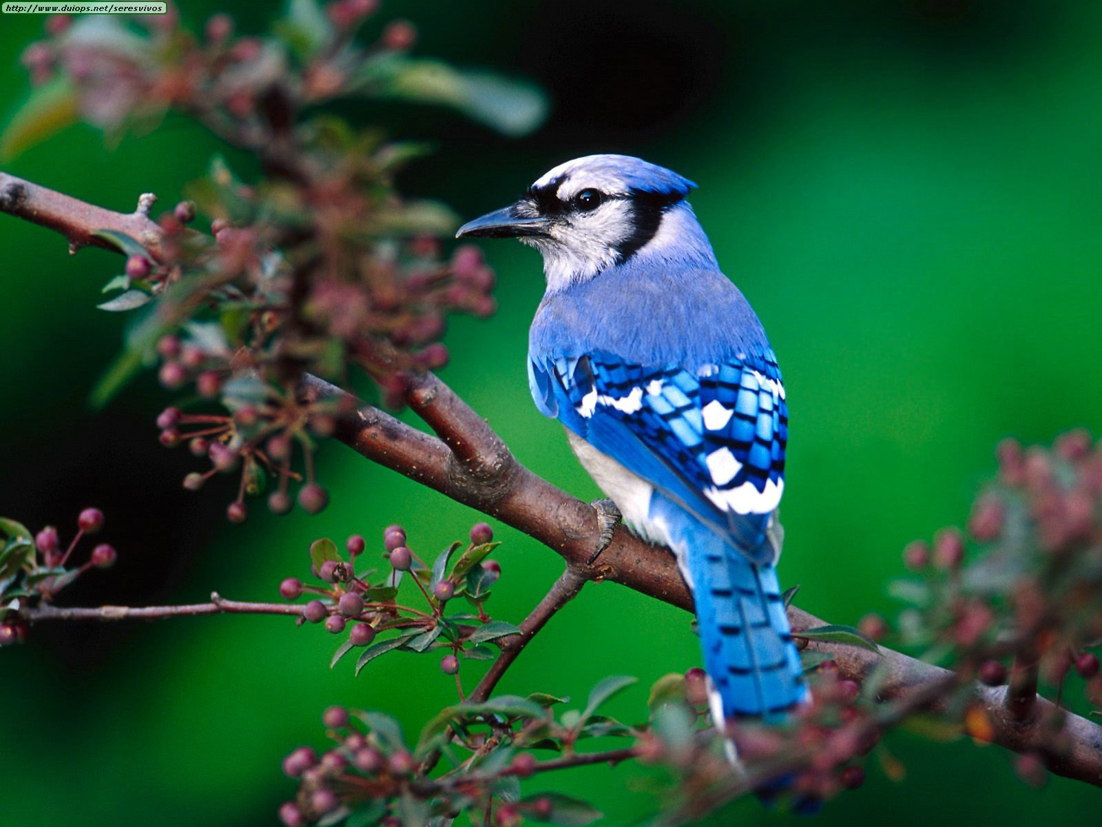 blue jay how to plumbing and home repair from levahn bros inc